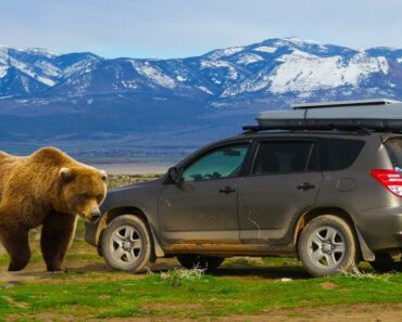 Tips for Car Camping in Bear Country (and Sleeping in