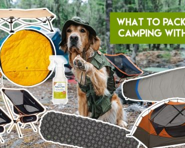 What To Pack When Camping With Dogs
