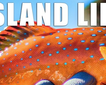 Catch and Cook Coral Trout while Camping and Fishing on
